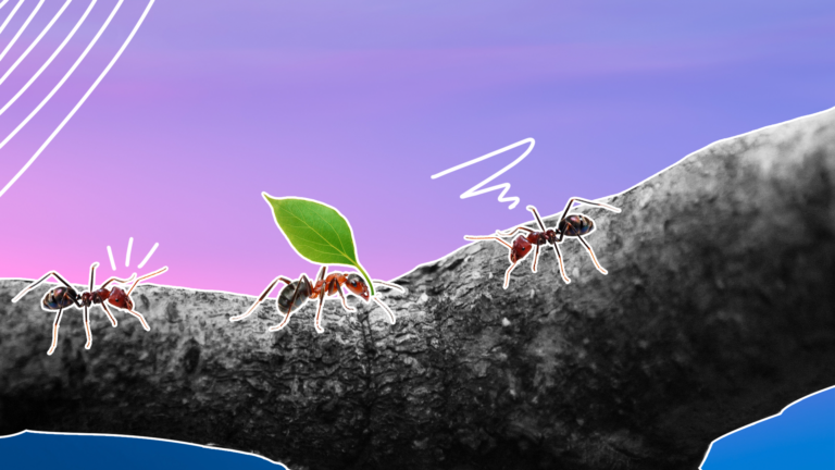 imagem de capa com 3 formigas caminhando em fila num tronco de árvore, sendo a formiga do meio levando uma folha representando como poupar dinheiro