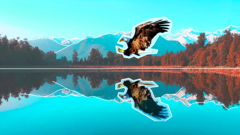imagem de capa com o gavião sobre um rio, olhando para o seu reflexo representando o marketing pessoal