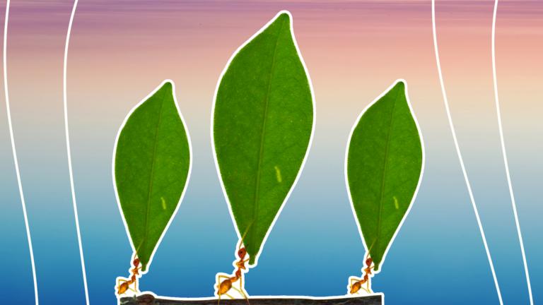 imagem de capa de blog com três formigas segurando uma folha representando a portabilidade de crédito
