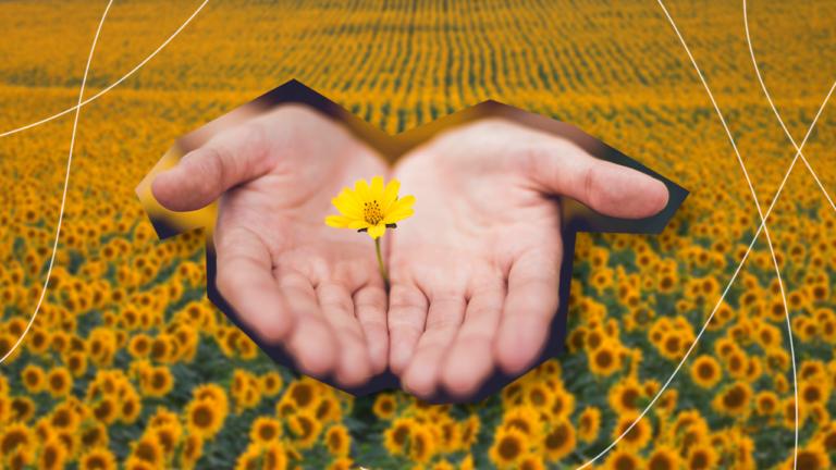 imagem de capa blog com um recorte de mãos abertas e justas apoiando uma flor amarela num gesto de apoio ao setembro amarelo com o fundo desfocado em um campo de girassóis