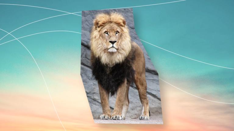 imagem de um leão olhando para a sua direção com a imagem recortada ao redor de sua silhueta representando o imposto de renda