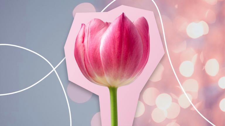 uma tulipa de cor rosa com as pétalas quase se abrindo representando as principais softs skills 4.0